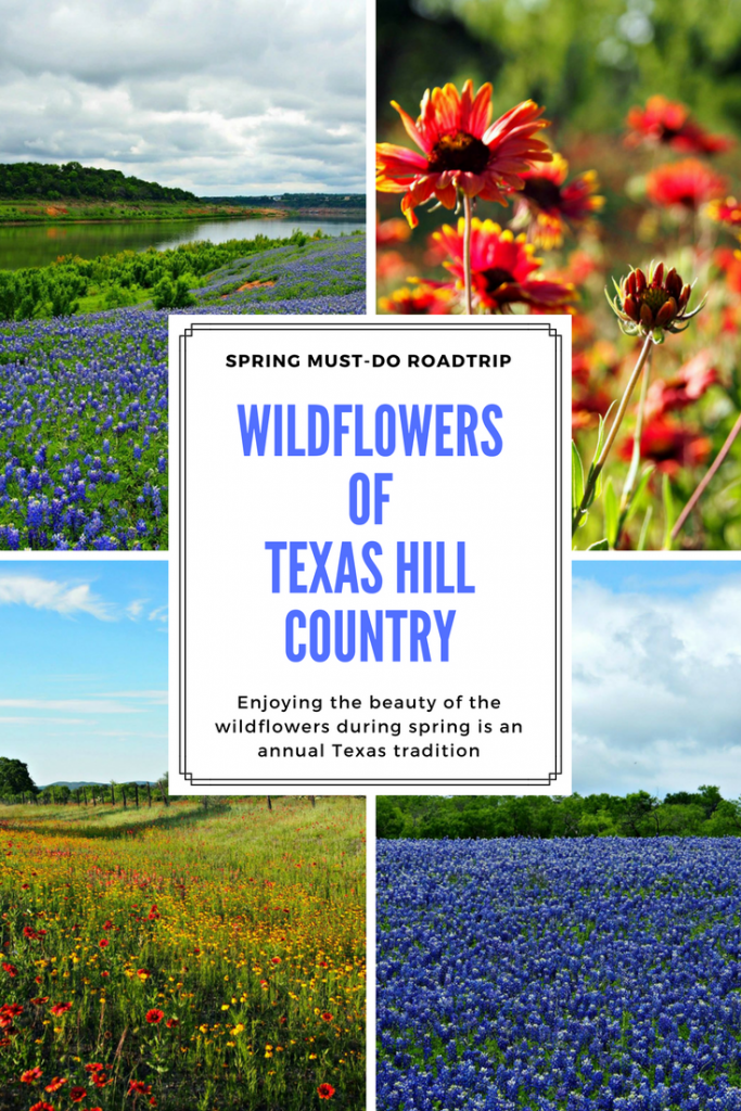wildflowers-texas-hill-country-bluebonnets-girlinchief