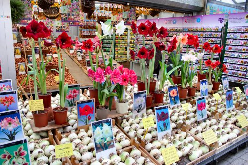 amsterdam-bloemen-market-stall-2