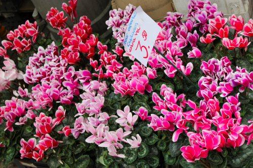 amsterdam-flowers-at-bloemen-market