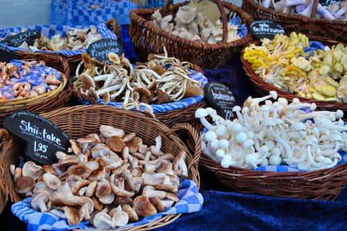 amsterdam-mushrooms-at-street-market