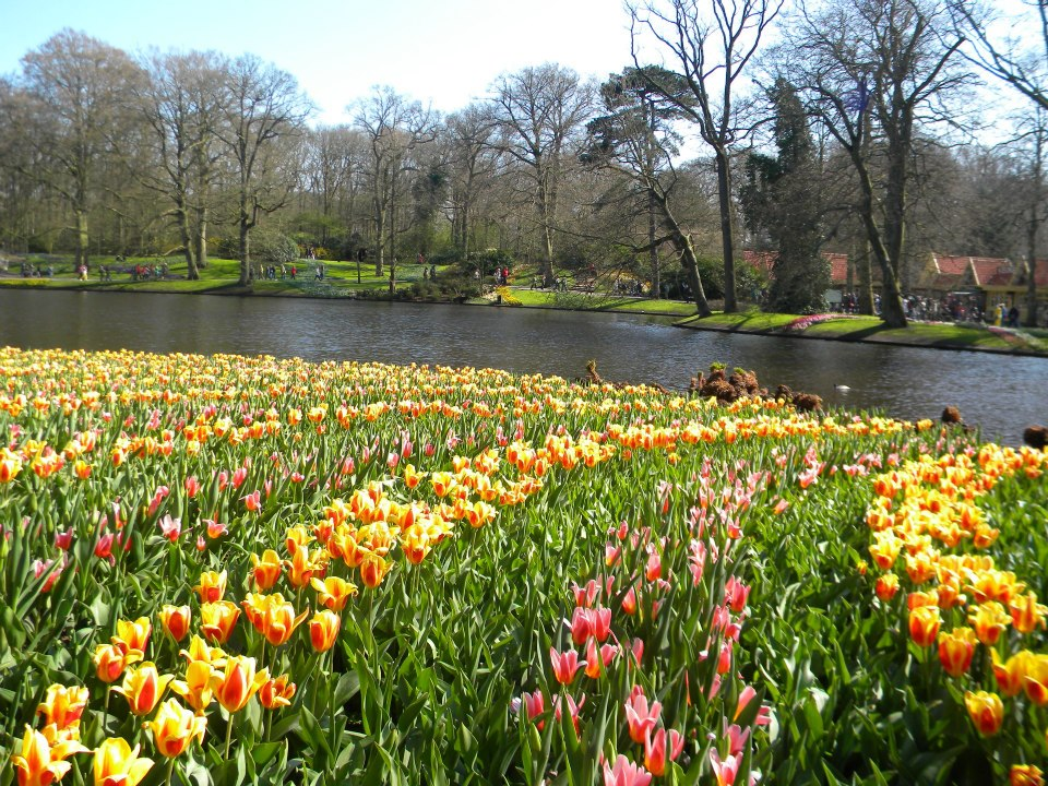amsterdam-tulip-garden