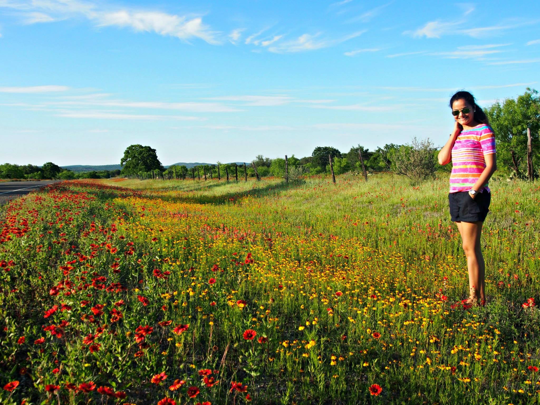 texas-wildflowers-2