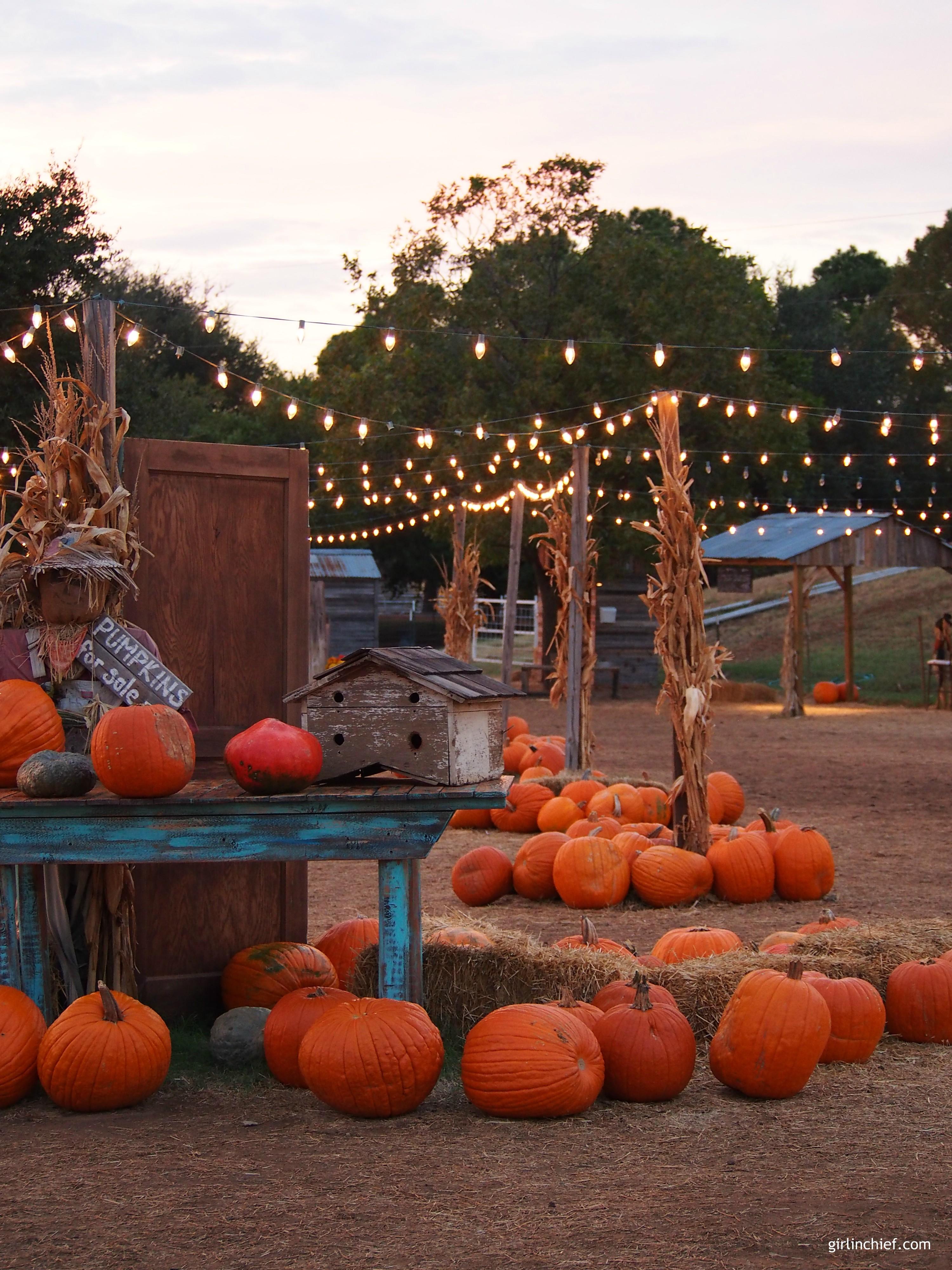 halls-pumpkin-farm-girlinchief
