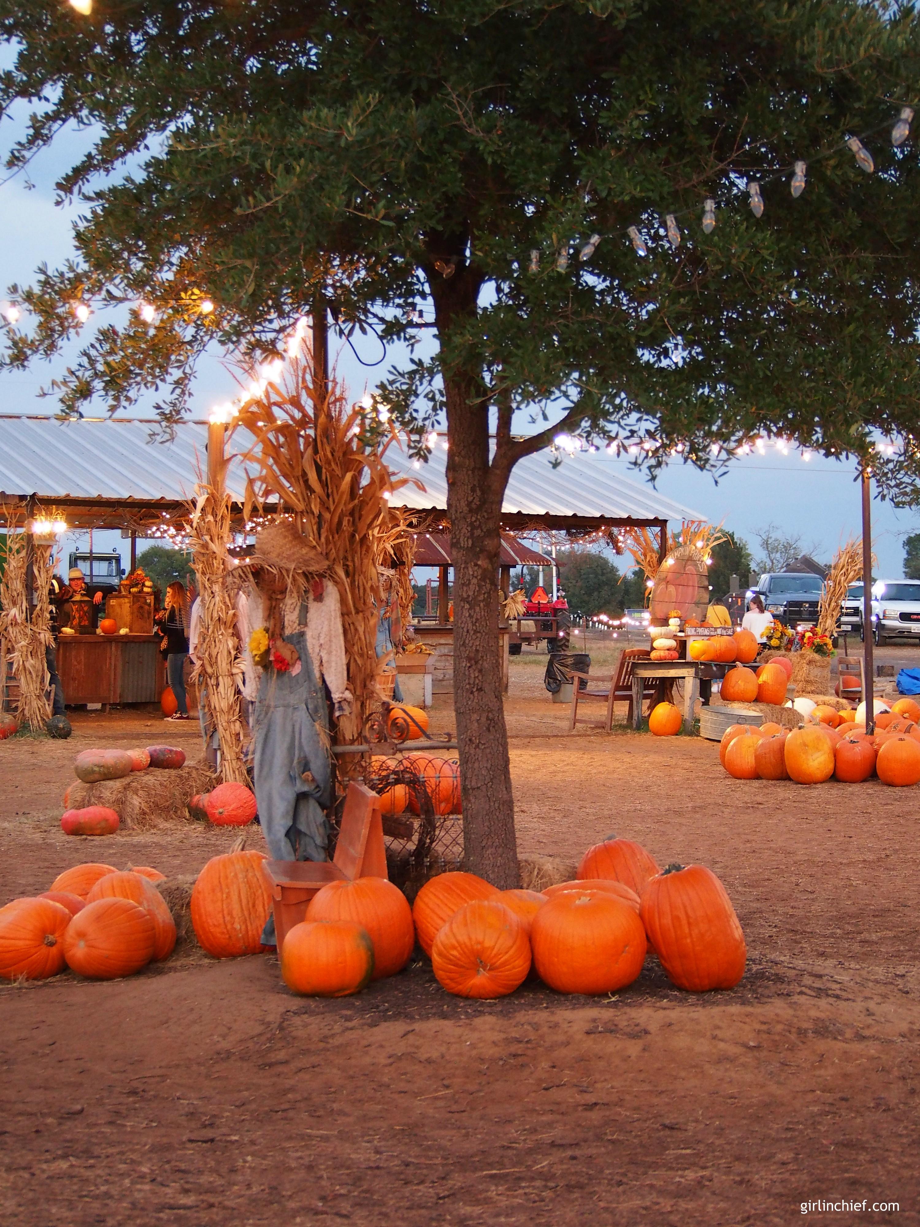 halls-pumpkin-farm-grapevine-tx-girlinchief