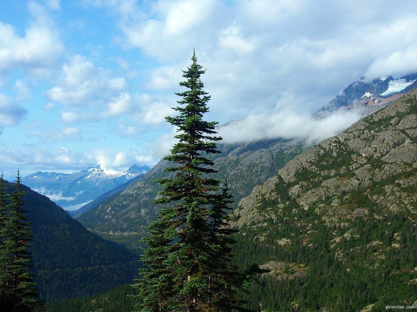 Alaska Cruise : Seeing Alaska's Beauty by Train on the White Pass & Yukon Rail