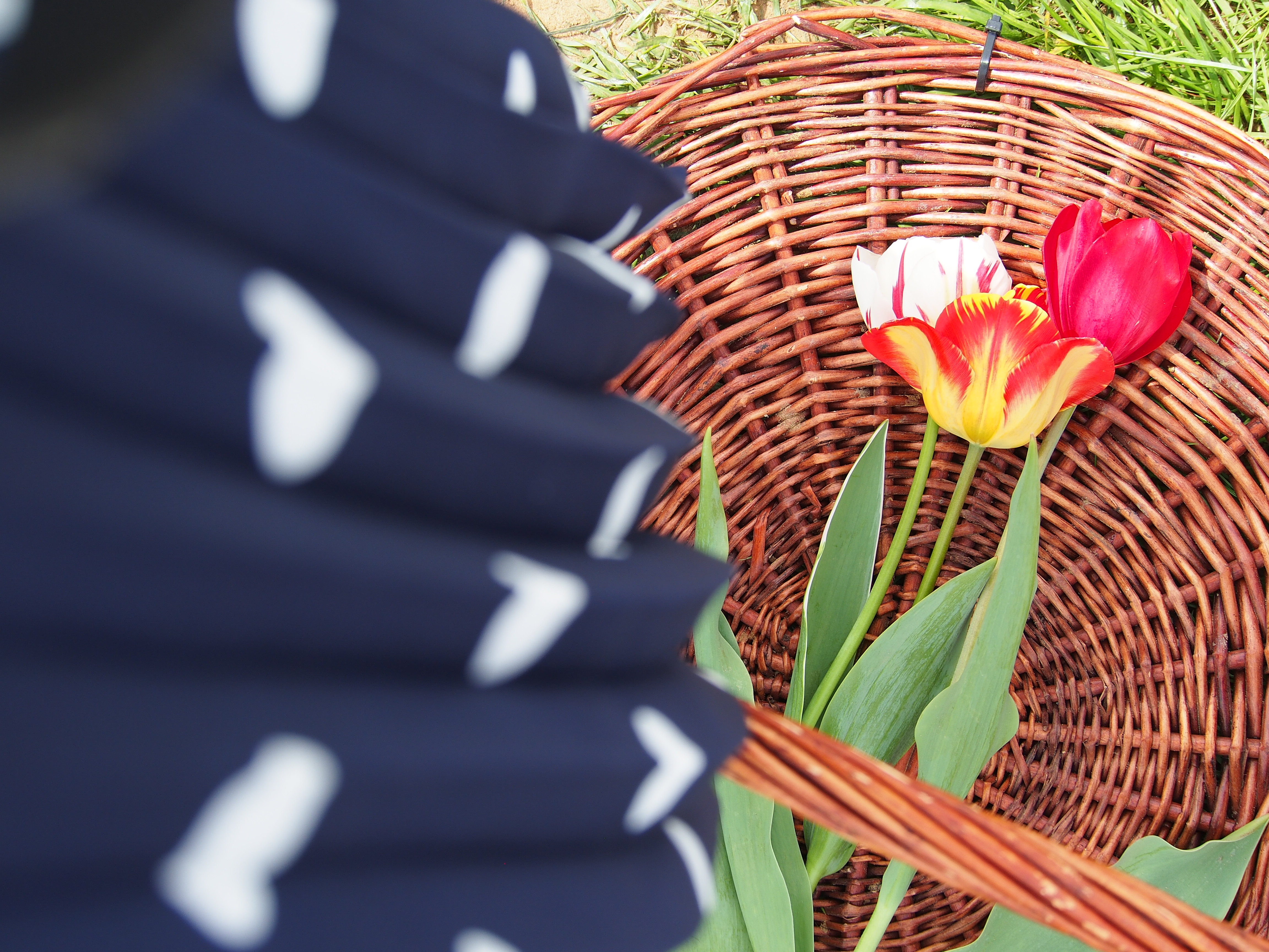 Texas Tulips: A Piece Of Holland In Texas